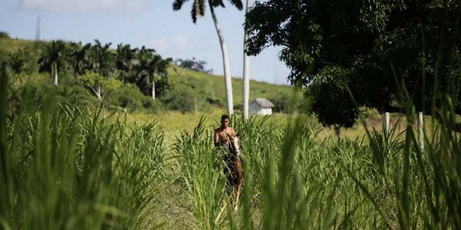 Agriculture 'most protected, least integrated' sector in South Asia