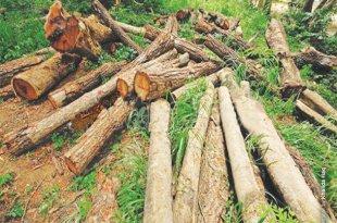 Rising threat of deforestation