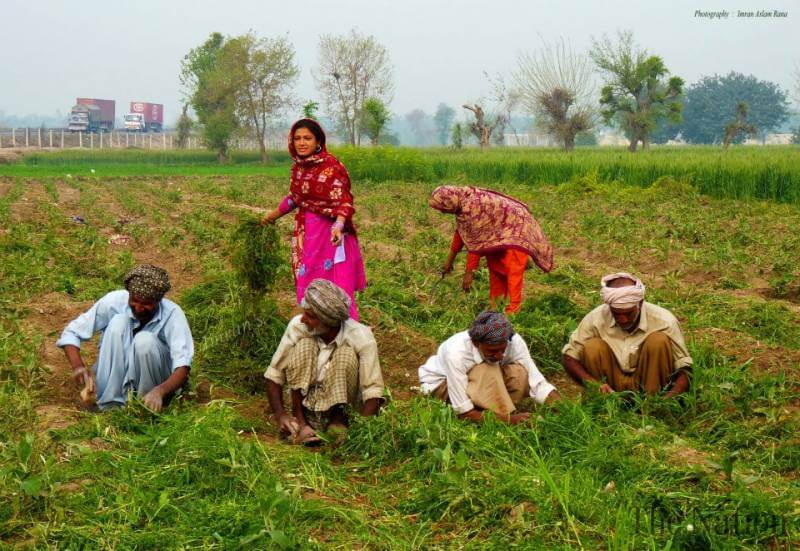 Rs 100b package to promote agriculture sector - CM - Image courtesy The Nation