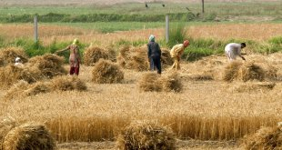 Dependence on agriculture